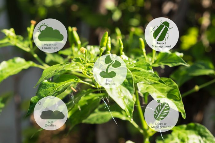Smart Farming: are robust sensors and the power of the cloud the perfect recipe?