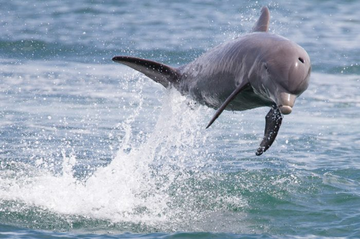 "Threat or Theory: How realistic are ""Dolphin Attacks"" in voice controlled systems?"